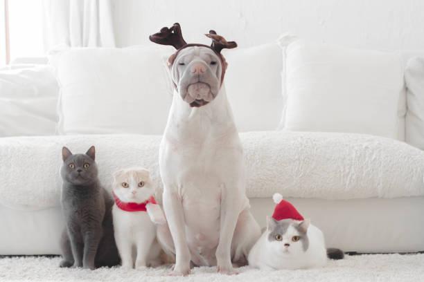 Shar pei dog and three cats dressed for Christmas:スマホ壁紙(壁紙.com)