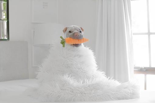 雪だるま「Shar pei dog dressed as a snowman」:スマホ壁紙(5)
