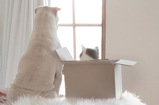 ショートヘア種の猫「Shar pei dog and cat in box looking out of a window」:スマホ壁紙(17)