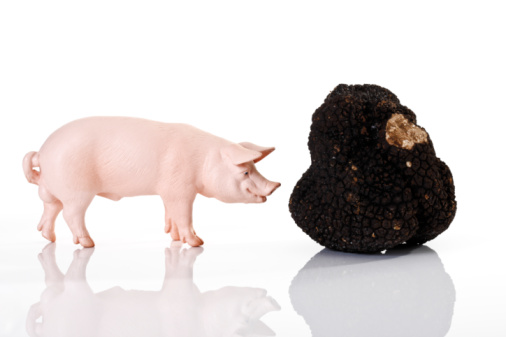 Figurine「Pig figurine and black truffle」:スマホ壁紙(3)