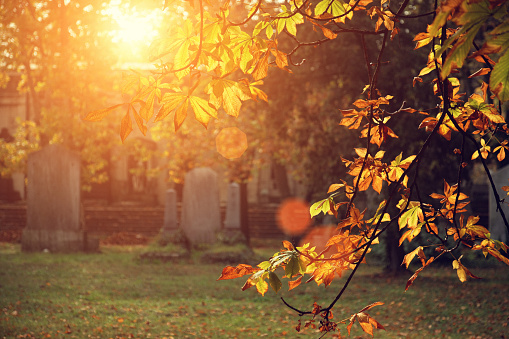 Cemetery「autumn sunlight in the cemetery」:スマホ壁紙(14)