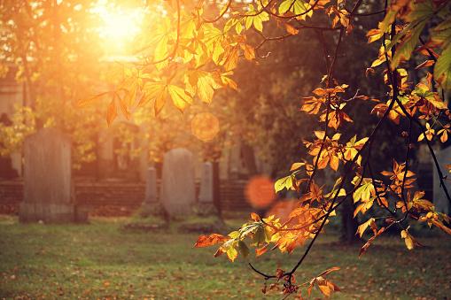 Chestnut「autumn sunlight in the cemetery」:スマホ壁紙(10)
