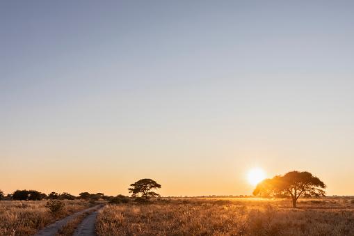 Kalahari Desert「Africa, Botswana, Central Kalahari Game Reserve, sand track at sunrise」:スマホ壁紙(18)