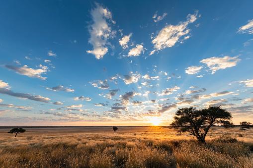 Kalahari Desert「Africa, Botswana, Kgalagadi Transfrontier Park, Mabuasehube Game Reserve, Mabuasehube Pan at sunrise」:スマホ壁紙(6)