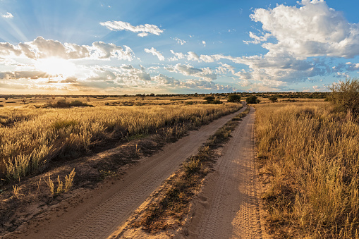 Kalahari Desert「Africa, Botswana, Kgalagadi Transfrontier Park, Mabuasehube Game Reserve, sand track at sunrise」:スマホ壁紙(19)