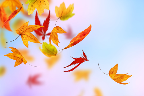 紅葉「秋」:スマホ壁紙(2)