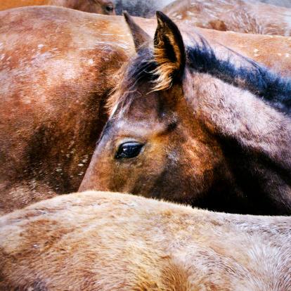 Horse「Head of horse」:スマホ壁紙(6)