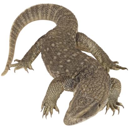Claw「Lizard」:スマホ壁紙(19)