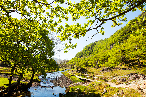 Steep「Watendlath beck off the Borrowdale Valley near Keswick, Lake District, UK.」:スマホ壁紙(18)