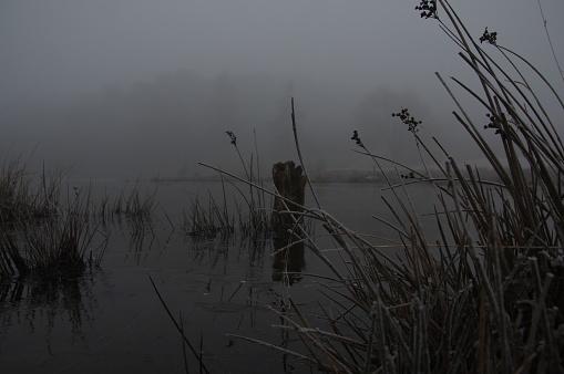 Eyesight「Misty heath」:スマホ壁紙(2)