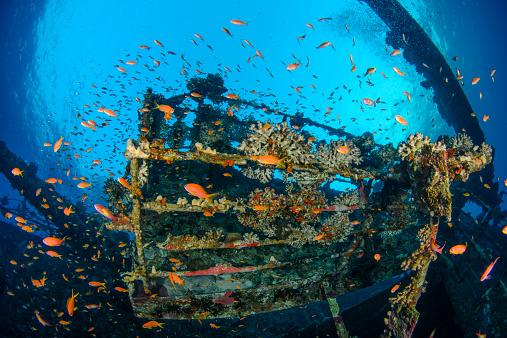 熱帯魚「The wreck of the Salem Express」:スマホ壁紙(10)