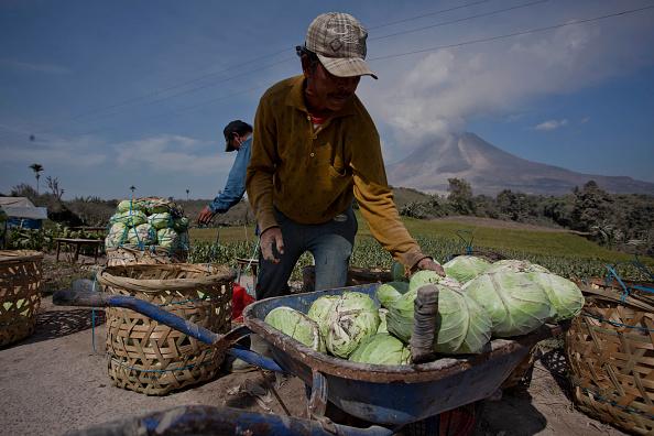 Active Volcano「Villages Left Devastated By Mount Sinabung Eruptions」:写真・画像(10)[壁紙.com]