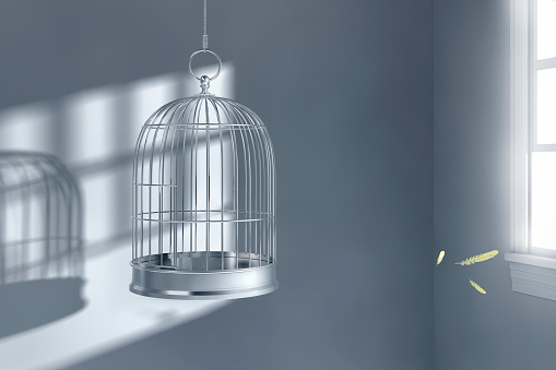 Corner「Feathers floating near empty birdcage」:スマホ壁紙(2)