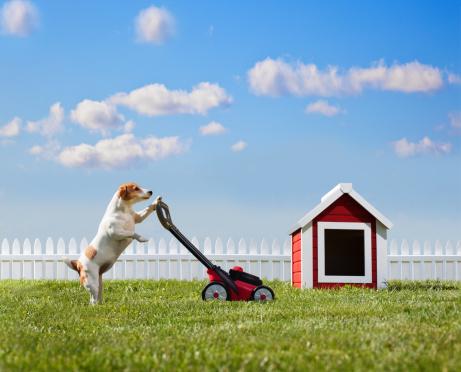 Gardening「Dog mowing lawn near dog house」:スマホ壁紙(1)
