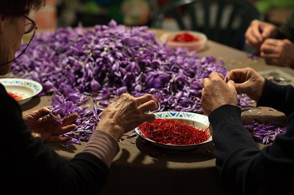 Spice「Saffron Harvest In Castilla La Mancha Region」:写真・画像(7)[壁紙.com]