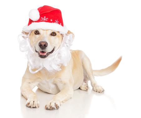 White Hair「Santa Dog」:スマホ壁紙(5)