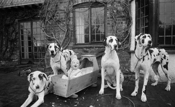 Human Interest「Naoh And His Dogs」:写真・画像(18)[壁紙.com]