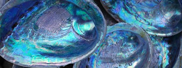 Paua shells being observed up close:スマホ壁紙(壁紙.com)