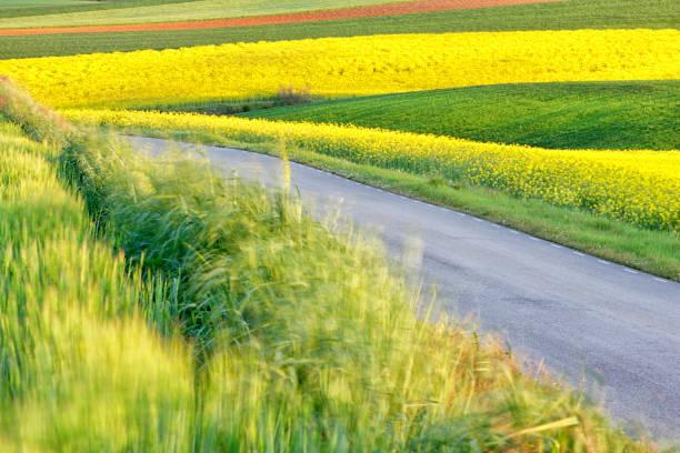 Colza field in Guadalajara. Flowers in spring. Castilla la Mancha. Spain:スマホ壁紙(壁紙.com)