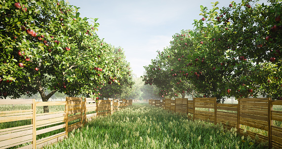 Apple - Fruit「Idyllic Orchard」:スマホ壁紙(18)