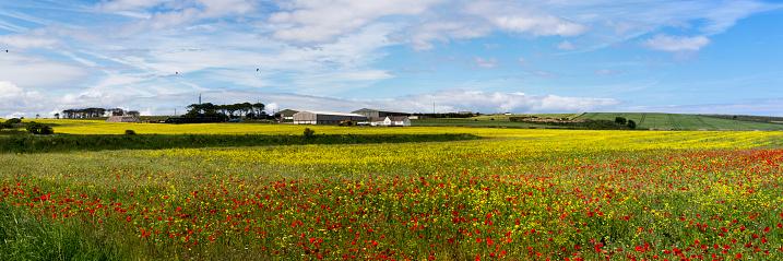 花「An abundance of red and yellow flowers in a field」:スマホ壁紙(17)