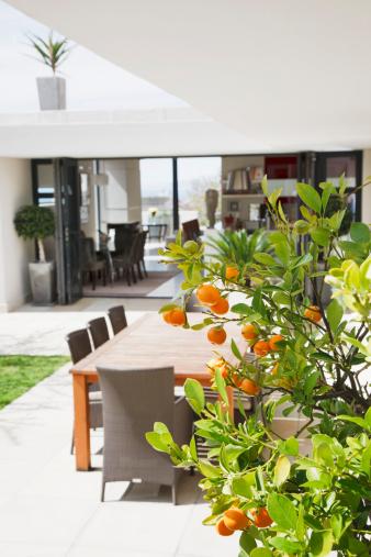 Deciduous tree「Dining area on modern patio」:スマホ壁紙(1)