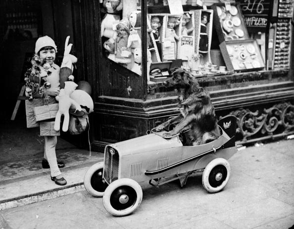 Hulton Archive「A Dog Goes Shopping」:写真・画像(9)[壁紙.com]
