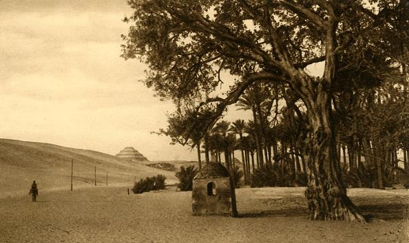 セイヨウカジカエデ「Saqqara - The Step Pyramid Seen From The Sycomore」:写真・画像(1)[壁紙.com]