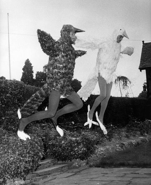 鳥「Bee Gee Bird Men」:写真・画像(3)[壁紙.com]