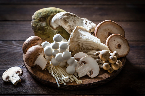 Oyster Mushroom「Various kinds of edible mushrooms」:スマホ壁紙(17)