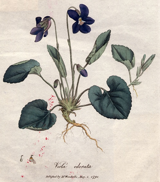 紫「Sweet Violet」:写真・画像(11)[壁紙.com]