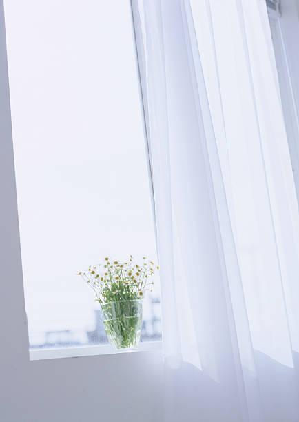 Flower on windowsill:スマホ壁紙(壁紙.com)