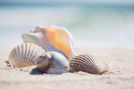 ビーチ「Group of sea shells on beach」:スマホ壁紙(1)