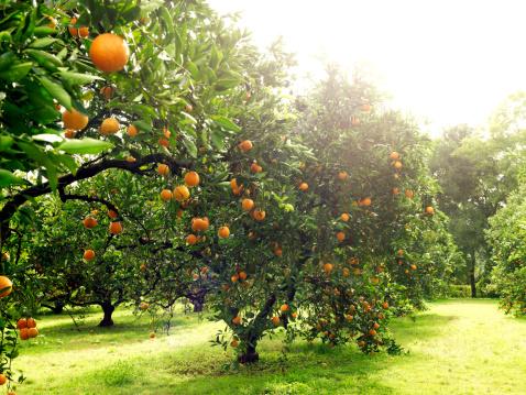 Branch - Plant Part「Orchards」:スマホ壁紙(9)