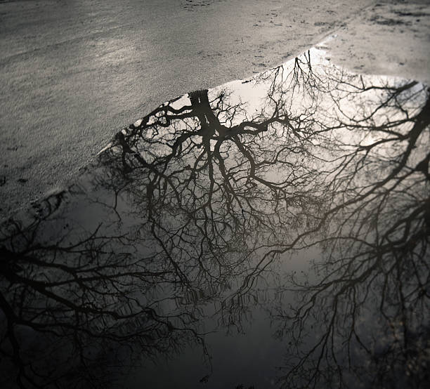 Naked trees reflected in a puddle, Rome Italy:スマホ壁紙(壁紙.com)