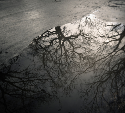 質感「Naked trees reflected in a puddle, Rome Italy」:スマホ壁紙(3)