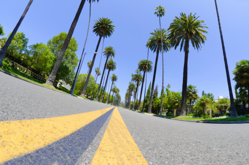 Dividing Line - Road Marking「Road with palm trees in Los Angeles County」:スマホ壁紙(12)