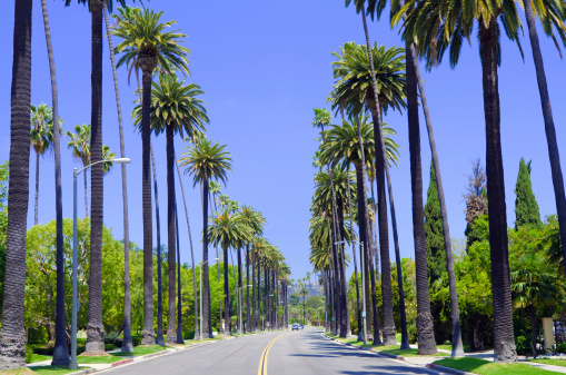 Santa Monica「Road with palm trees in Los Angeles County」:スマホ壁紙(3)