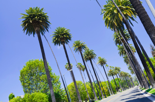 Santa Monica「Road with palm trees in Los Angeles County」:スマホ壁紙(12)