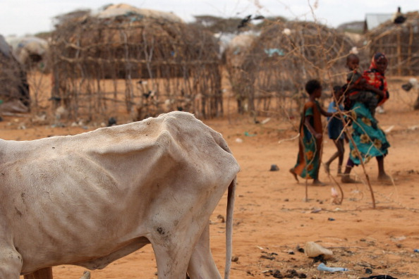 動物「Refugees Flock To Dadaab As Famine Grips Somalia」:写真・画像(16)[壁紙.com]