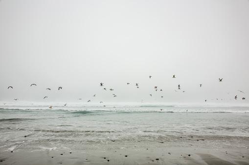 Large Group Of Animals「Birds flying on ocean beach」:スマホ壁紙(19)