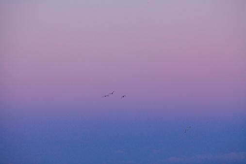 Japan「Birds Flying at Dawn」:スマホ壁紙(3)