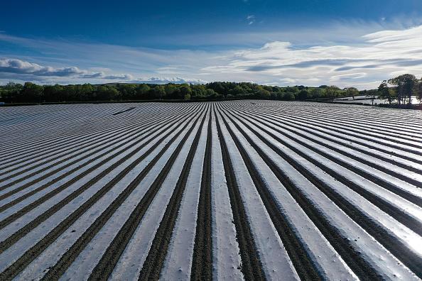 Corn「Agricultural Work Continues Amid Coronavirus Lockdowns」:写真・画像(14)[壁紙.com]