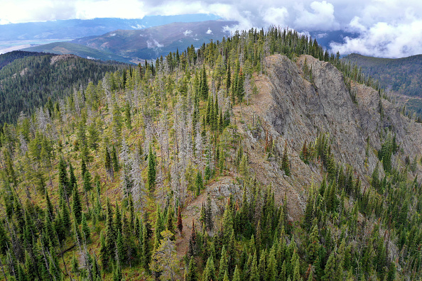 Nature「Montana Forests Struggle With Climate Change」:写真・画像(9)[壁紙.com]