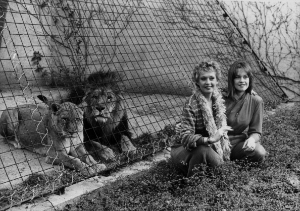 動物「Tippi Hedren And Melanie Griffith」:写真・画像(12)[壁紙.com]