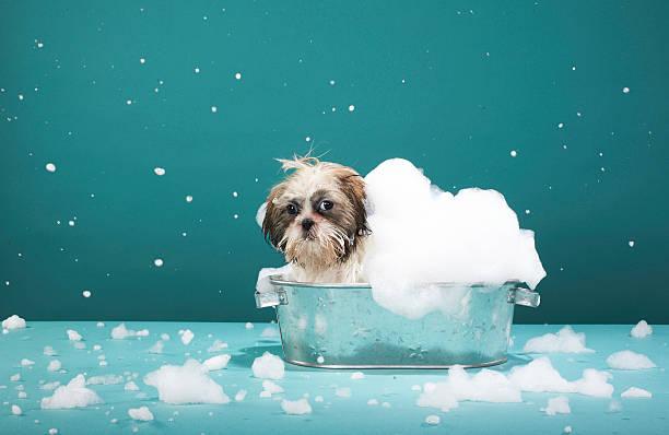 Puppy in foam bath:スマホ壁紙(壁紙.com)