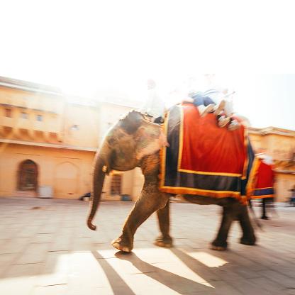 お祭り「ジャイプールの象」:スマホ壁紙(3)