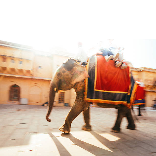 Jaipur Elephant:スマホ壁紙(壁紙.com)