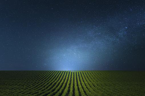 Non-Urban Scene「Blue clear Night over the vineyards.」:スマホ壁紙(7)
