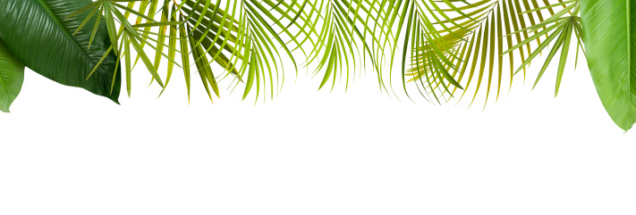 Frond「Tropical green leaves frame with copy space」:スマホ壁紙(14)